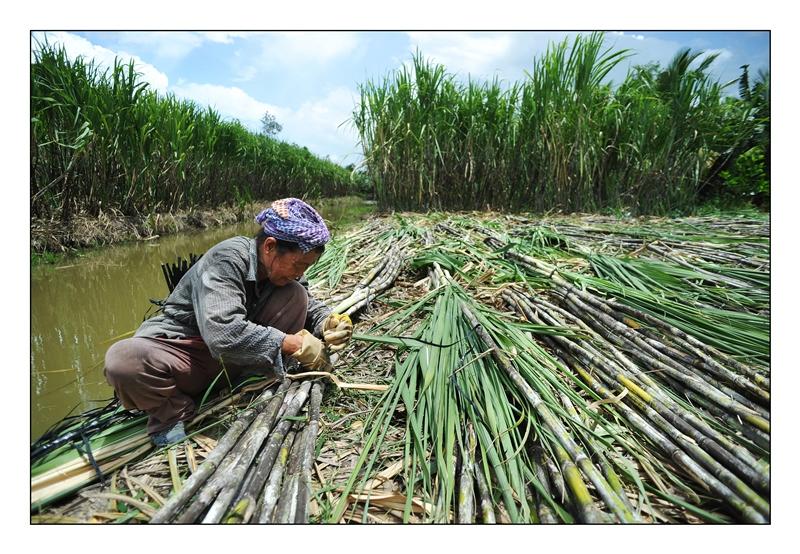 Bước tiến khác trong phát triển năng lượng tái tạo tại Việt Nam: Quyết định tăng giá điện sinh khối đã được phê duyệt